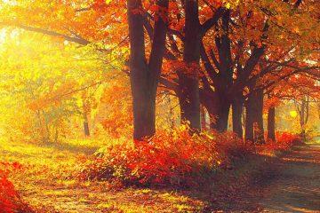 קטע קריאה באנגלית לכיתה ט Fun Facts About Fall